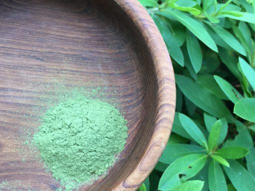 Back To Your Roots Herbs - Moringa (moringa oleifera)