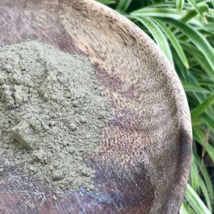 Mimosa pudica seed