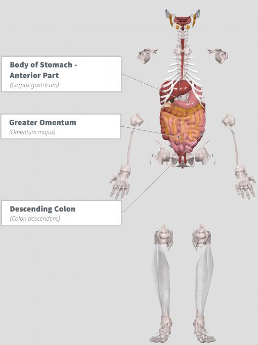 Bowel Dysfunction Function Anatomy