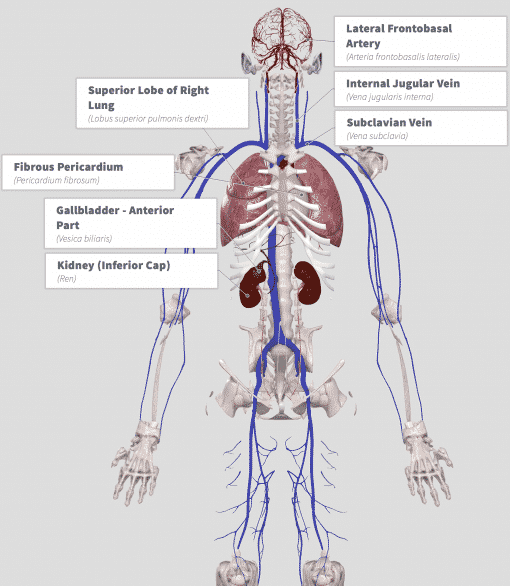 Shilajit (Asphaltum bitumen) Anatomy
