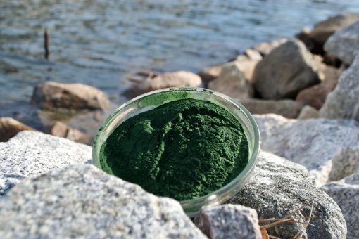 Blue Green Algae 3