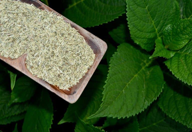 Cancer bush powder