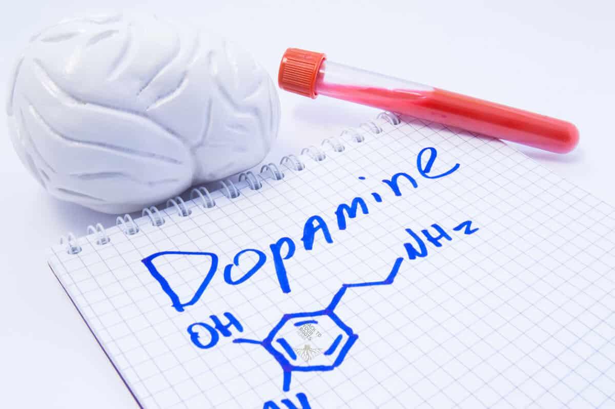 What is Aporphine