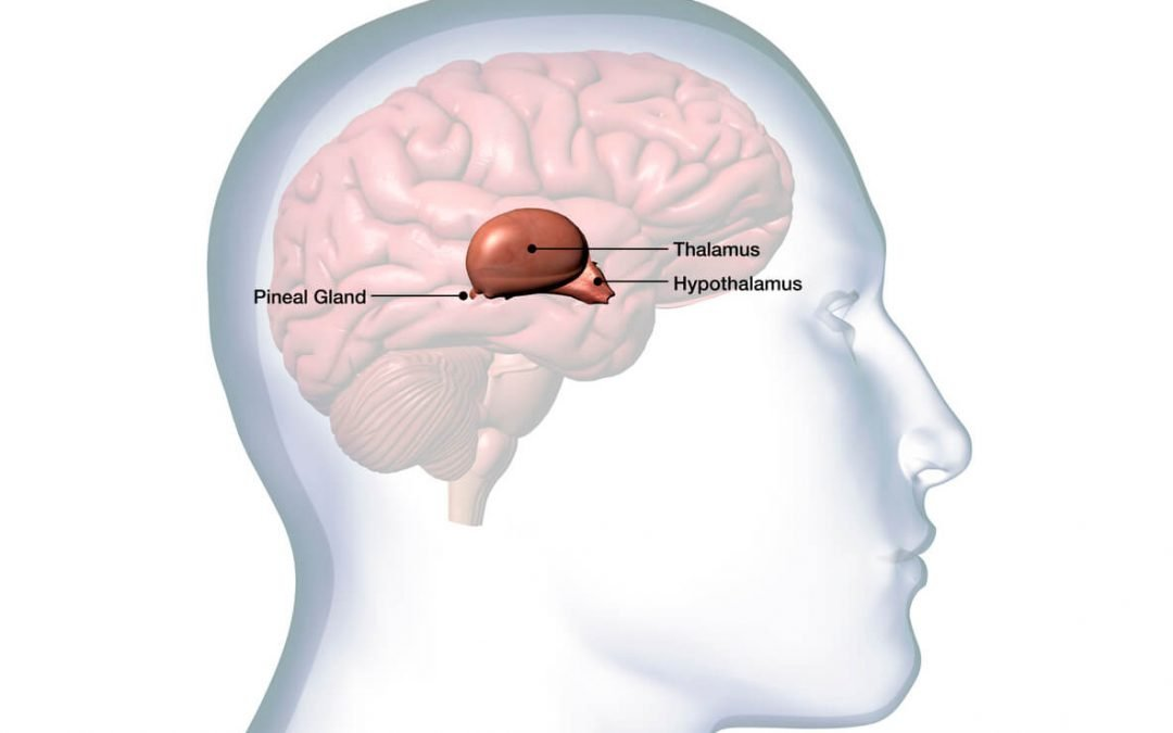 Best Herbs For Hypothalamus