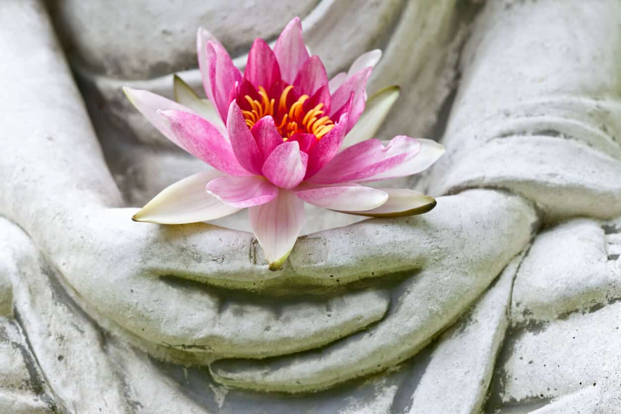 Hands holding lotus flowers