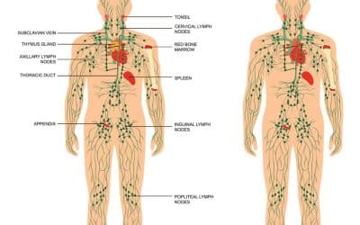 What Is The Lymphatic System?