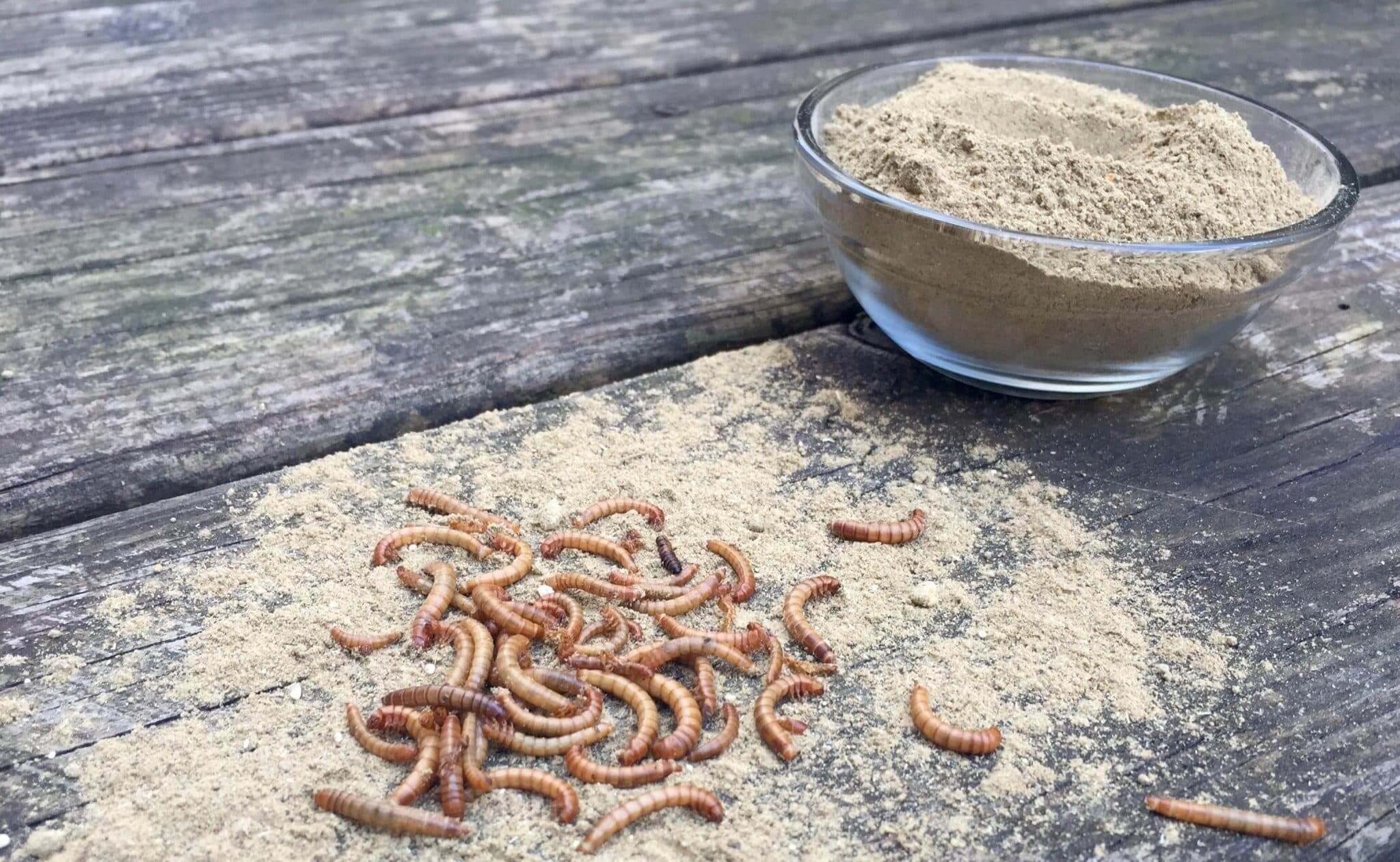 parasite and worm cleanse